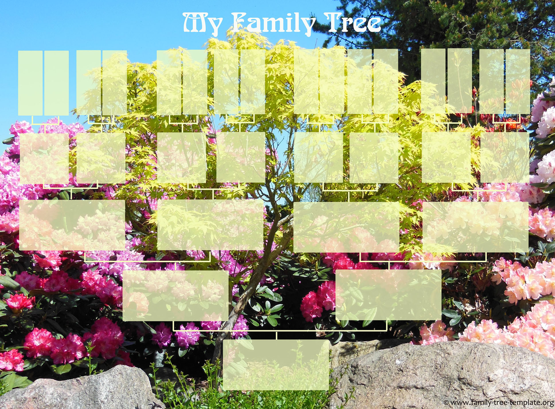 5 generations family tree.