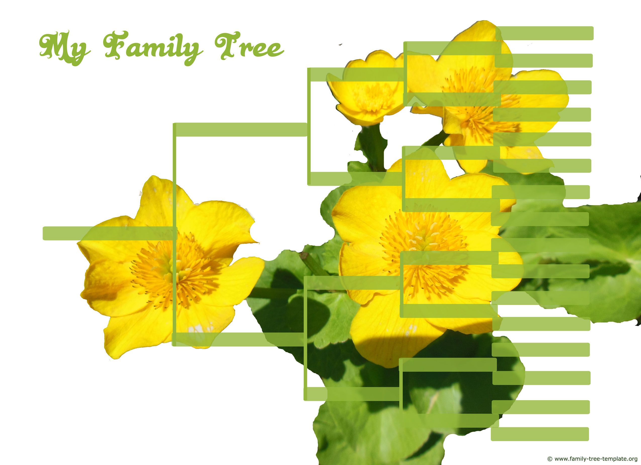 Large extended genalogy tree with yellow flowers