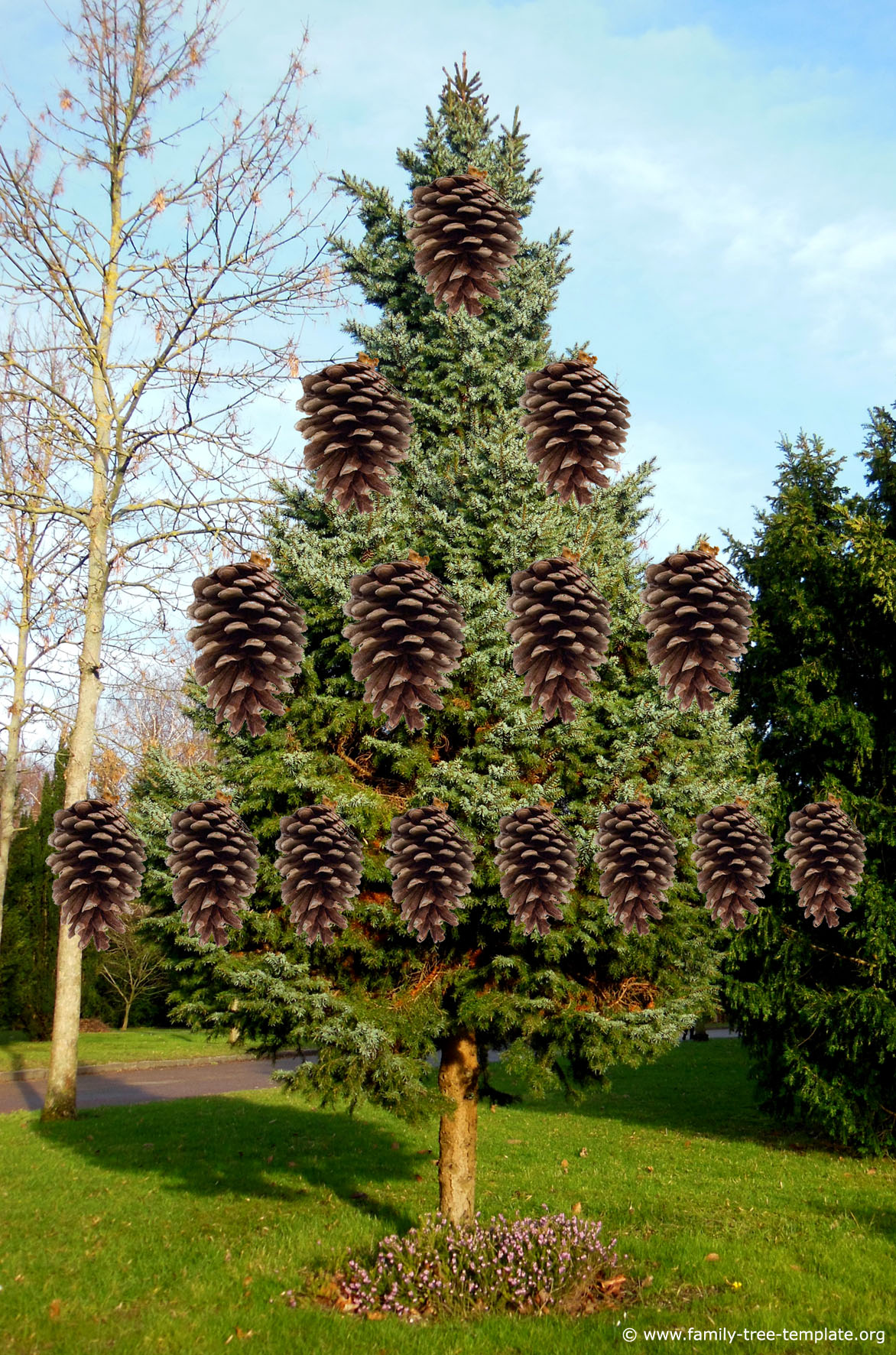 Fun printable free family tree template for kids with pine cones as relatives.
